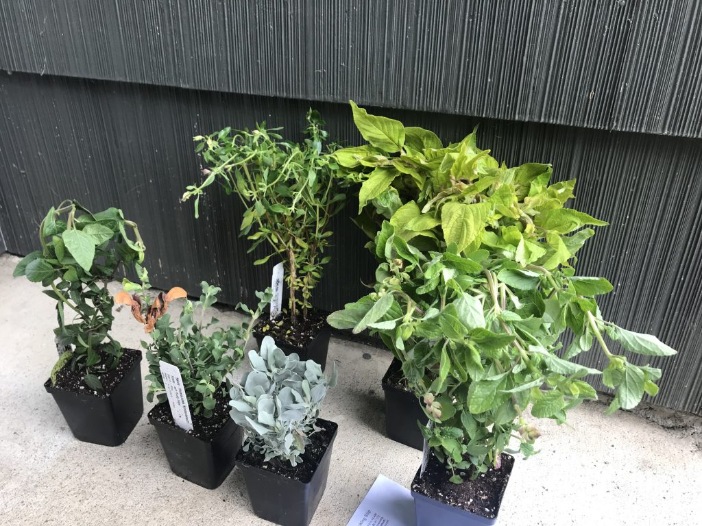 unboxed mail-order plants